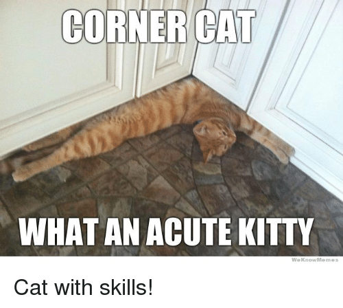 Memes, 🤖, and Kittie: CORNER CAT  WHAT AN ACUTE KITTY  We Know Memes Cat with skills!