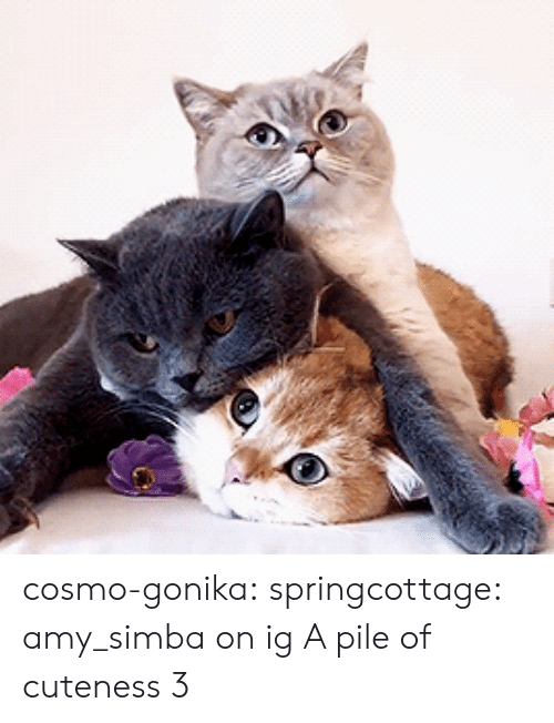 Instagram, Tumblr, and Blog: cosmo-gonika: springcottage: amy_simba on ig A pile of cuteness 3