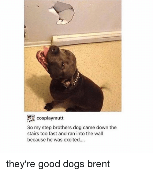 Memes, Step Brothers, and Cosplay: cosplay mutt  So my step brothers dog came down the  stairs too fast and ran into the wall  because he was excited.... they're good dogs brent