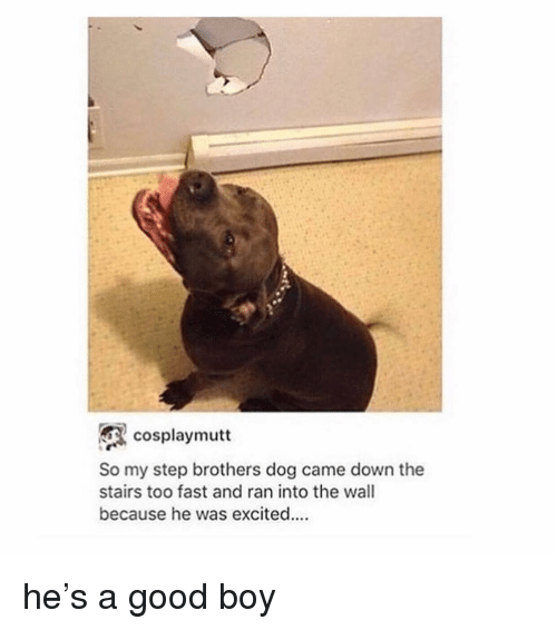 Memes, Step Brothers, and Good: cosplaymutt  So my step brothers dog came down the  stairs too fast and ran into the wall  because he was excited. he's a good boy