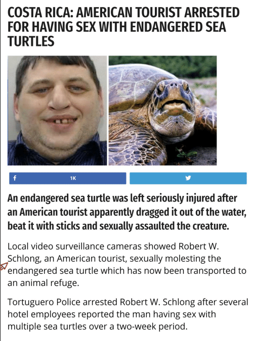 Apparently, Period, and Police: COSTA RICA: AMERICAN TOURIST ARRESTED  FOR HAVING SEX WITH ENDANGERED SEA  TURTLES  1K  An endangered sea turtle was left seriously injured after  an American tourist apparently dragged it out of the water,  beat it with sticks and sexually assaulted the creature.  Local video surveillance cameras showed Robert W  Schlong, an American tourist, sexually molesting the  endangered sea turtle which has now been transported to  an animal refuge  Tortuguero Police arrested Robert W. Schlong after several  hotel employees reported the man having sex With  multiple sea turtles over a two-week period