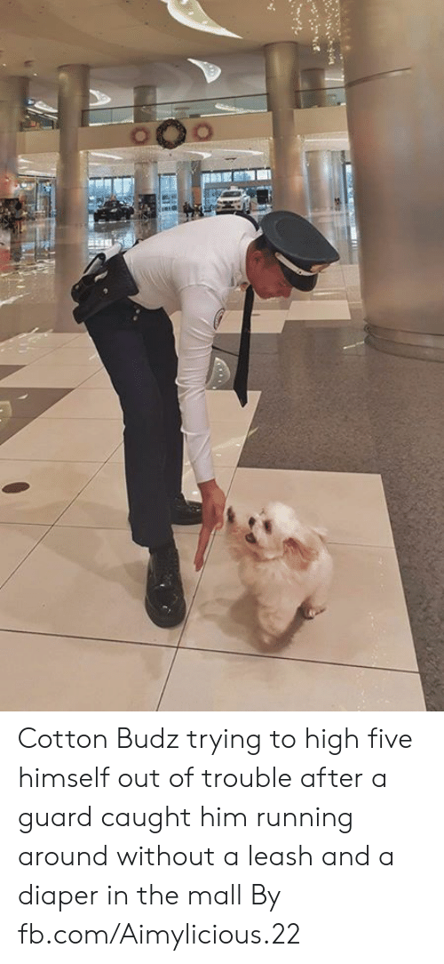 Dank, fb.com, and Running: Cotton Budz trying to high five himself out of trouble after a guard caught him running around without a leash and a diaper in the mall  By fb.com/Aimylicious.22