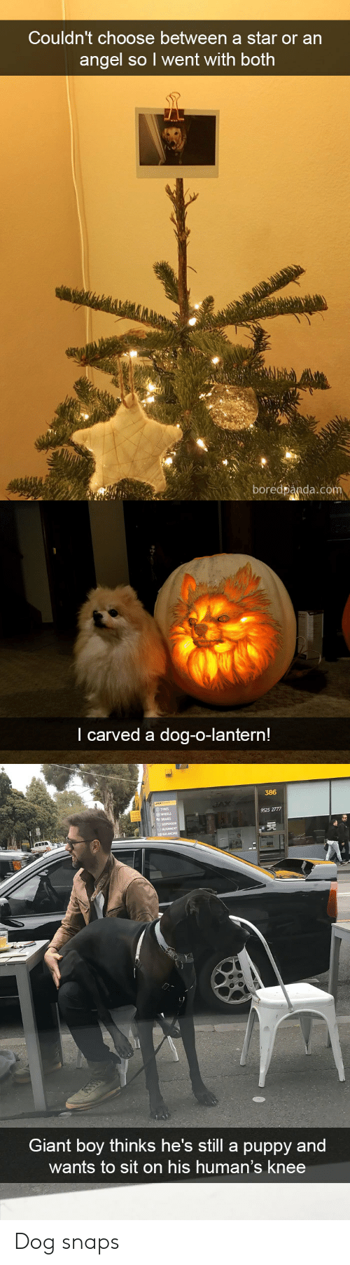 Angel, Giant, and Puppy: Couldn't choose between a star or an  angel so l went with both  boredpanda.com   I carved a dog-o-lantern!   386  TYRES  9525 2777  HEELS  Giant boy thinks he's still a puppy and  wants to sit on his human's knee Dog snaps