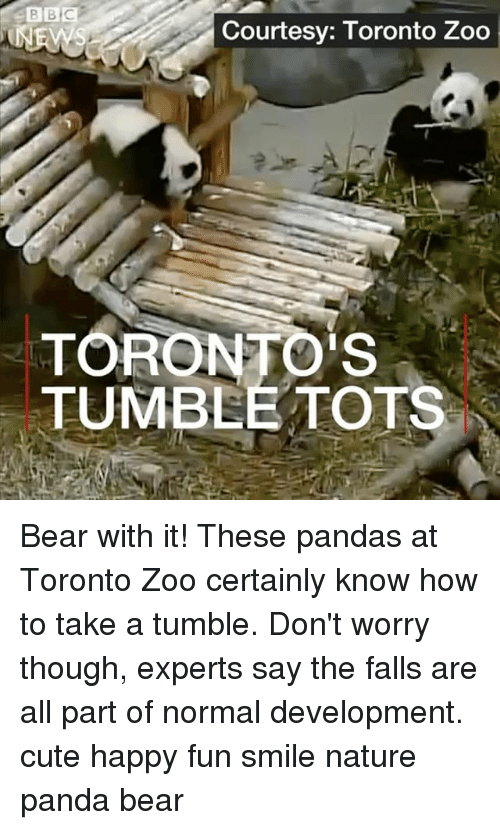 Cute, Memes, and Panda: Courtesy: Toronto Zoo  TORONTO'S  TUMBEE TOTS Bear with it! These pandas at Toronto Zoo certainly know how to take a tumble. Don't worry though, experts say the falls are all part of normal development. cute happy fun smile nature panda bear