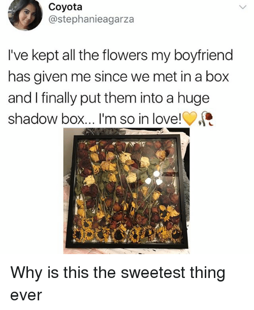 Love, Memes, and Flowers: Coyota  @stephanieagarza  I've kept all the flowers my boyfriend  has given me since we met in a box  and I finally put them into a huge  shadow box... I'm so in love! Why is this the sweetest thing ever