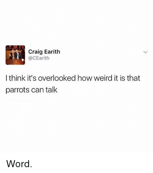 Memes, Weird, and Craig: Craig Earith  @CEarith  I think it's overlooked how weird it is that  parrots can talk Word.