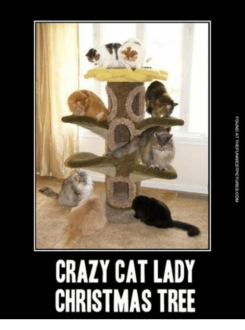 crazy cat lady christmas tree found at thefunniestpictures com ye ts 11273731 ✅ 25 best memes about crazy cat lady crazy cat lady memes