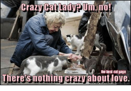crazy cat lady pum no the best eat page theres 12345549 ✅ 25 best memes about crazy cat lady crazy cat lady memes