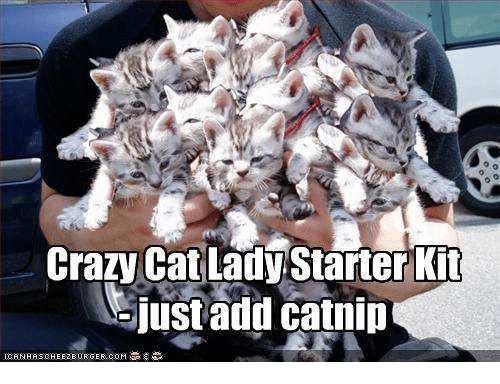 Real crazy cat lady