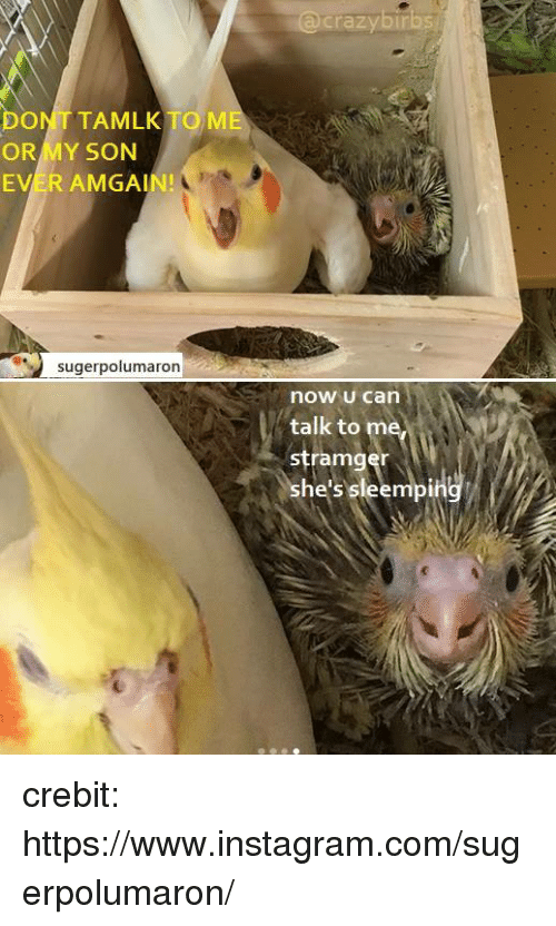 Instagram, Me or My Son, and Com: crazybir  DONT TAMLK TO ME  OR MY SON  EVER AMGAIN!  sugerpolumaron  now u can  talk to  stramger  she's sleempin crebit: https://www.instagram.com/sugerpolumaron/