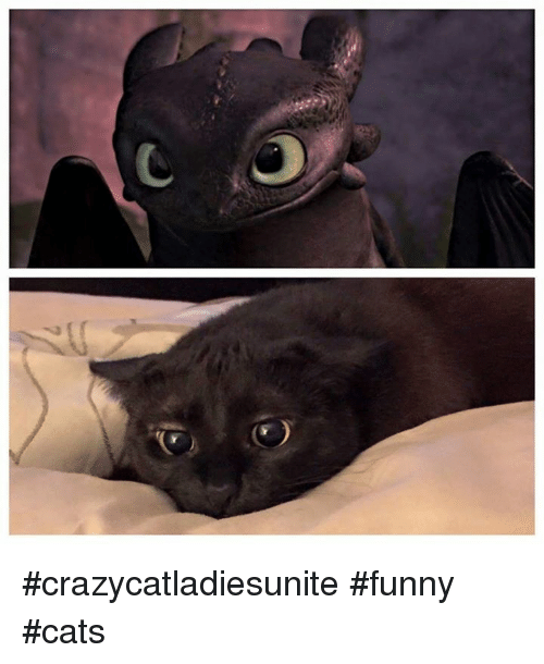 Crazy Cat Pictures Facebook