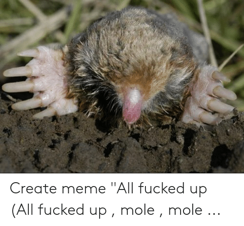 Create Meme All Fucked Up All Fucked Up Mole Mole | Meme on ME ME