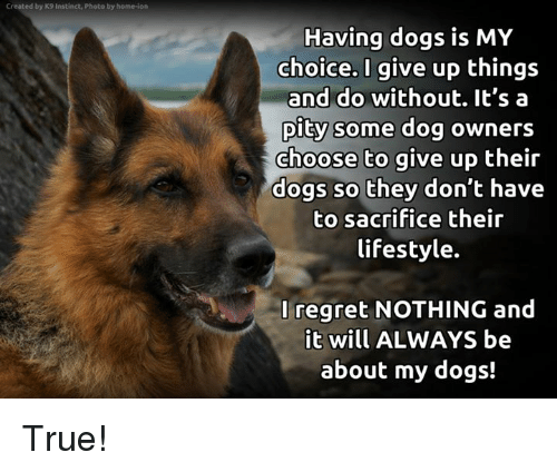 Dogs, Memes, and True: Created by K9 Instinct, Photo by home-ion  Having dogs is MY  choice. I give up things  and do without. It's a  pity some dog owners  choose to give up their  dogs so they don't have  to sacrifice their  lifestyle.  Iregret NOTHING and  t will ALWAYS be  about my dogs! True!
