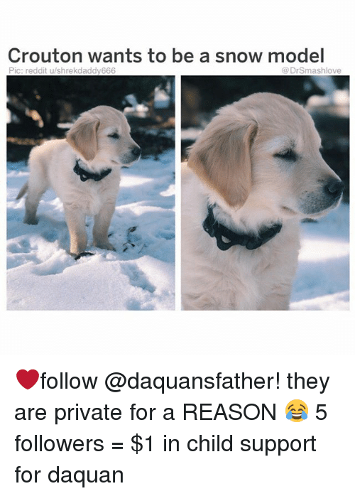Child Support, Daquan, and Memes: Crouton wants to be a snow model  Pic: reddit u/shrekdaddy666  @DrSmashlove ❤️follow @daquansfather! they are private for a REASON 😂 5 followers = $1 in child support for daquan