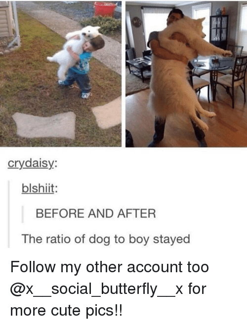 Cute, Memes, and Butterfly: crydaisy:  blshiit  BEFORE AND AFTER  The ratio of dog to boy stayed Follow my other account too @x__social_butterfly__x for more cute pics!!