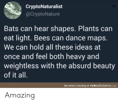 Maps, Absurd, and Amazing: CryptoNaturalist  @CryptoNature  Bats can hear shapes. Plants can  eat light. Bees can dance maps.  We can hold all these ideas at  once and feel both heavy and  weightless with the absurd beauty  of it all.  See what's trending at FUNSubstance.com Amazing