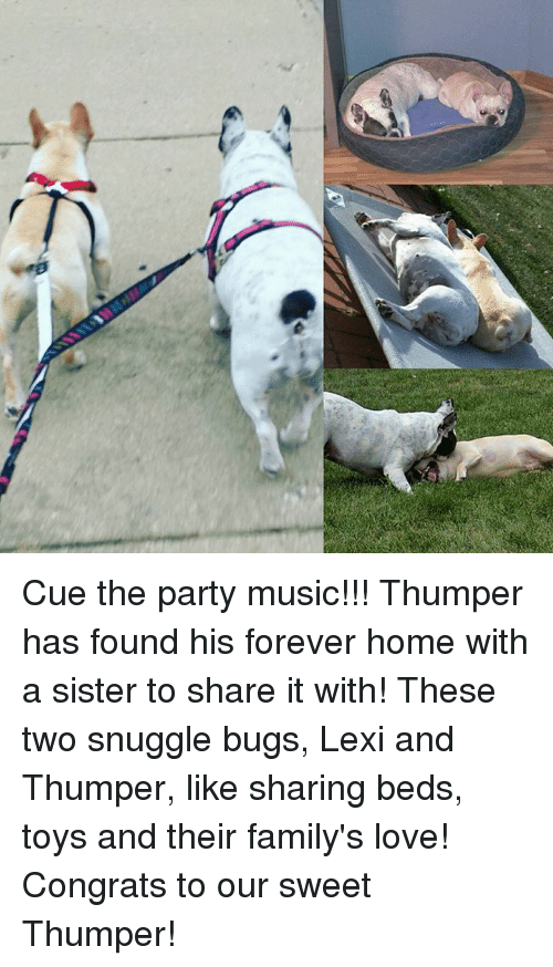 Cue the Party Music!!! Thumper Has Found His Forever Home With a