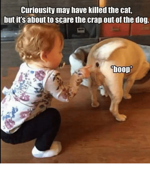 Cats, Dank, and Dogs: Curiousity may have killed the cat,  but its about to Scare the crap out of the dog.  boop