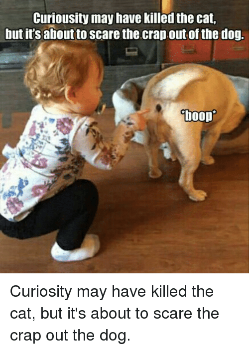 Cats, Dogs, and Funny: Curiousity may have killed the cat,  but its aboutto scare the crap out of the dog.  boop Curiosity may have killed the cat, but it's about to scare the crap out the dog.