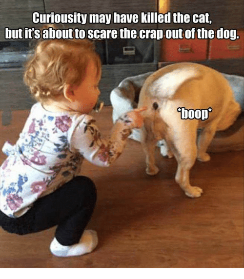 Cats, Memes, and Scare: Curiousity may have killed the cat,  but it's aboutto scare the crap.out of the dog.  boop