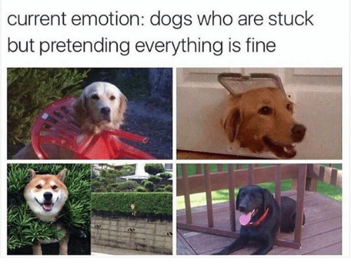 current emotion dogs who are stuck but pretending everything is 14503362 current emotion dogs who are stuck but pretending everything is,Dank Memes Dog