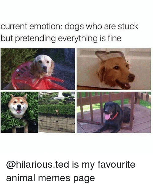 Dogs, Memes, and Ted: current emotion: dogs who are stuck  but pretending everything is fine @hilarious.ted is my favourite animal memes page