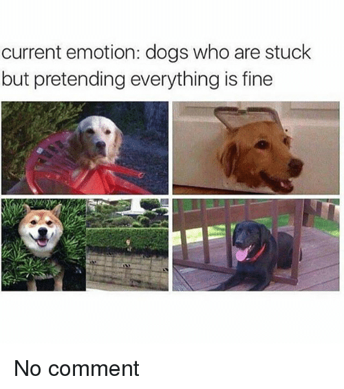 Dogs, Memes, and 🤖: current emotion: dogs who are stuck  but pretending everything is fine No comment