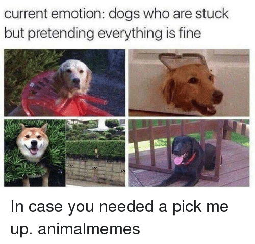 Dogs, Memes, and 🤖: current emotion: dogs who are stuck  but pretending everything is fine In case you needed a pick me up. animalmemes