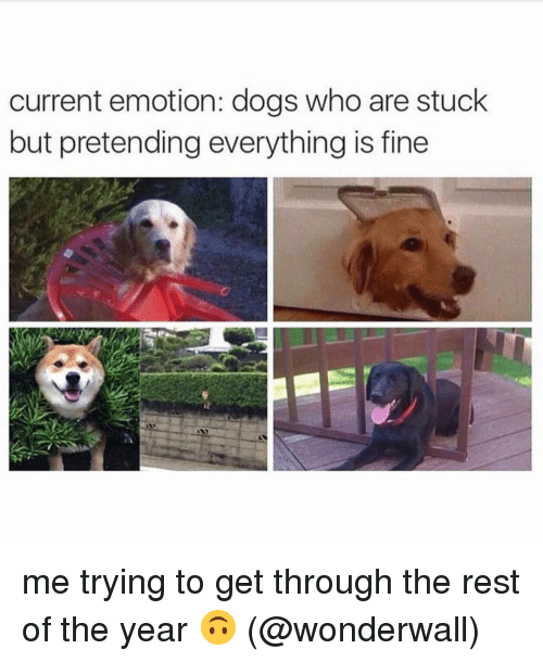 Dogs, Memes, and Wonderwall: current emotion: dogs who are stuck  but pretending everything is fine me trying to get through the rest of the year 🙃 (@wonderwall)