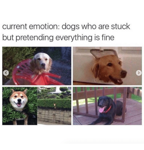 Dogs, Who, and Fine: current emotion: dogs who are stuck  but pretending everything is fine