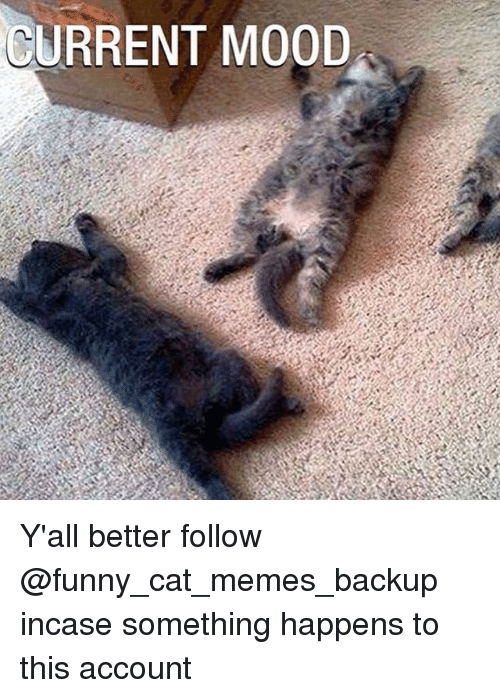 current mood yall better follow funny cat memes backup incase something happens to 790251 ✅ 25 best memes about funny cats meme funny cats memes,Backup Funny Memes
