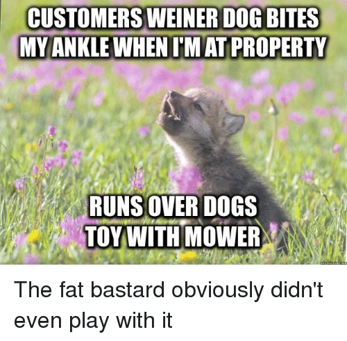 25+ Best Memes About Weiner Dogs