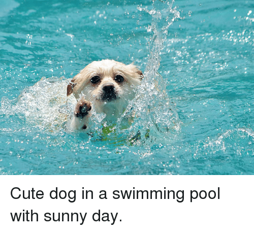 Cute Dog In A Swimming Pool With Sunny