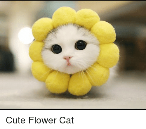 Cat Flowers Gif