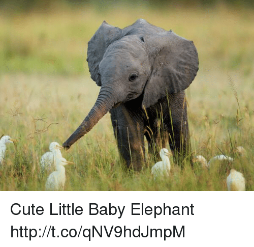 cute little baby elephant httptcoqnv9hdjmpm cute meme on