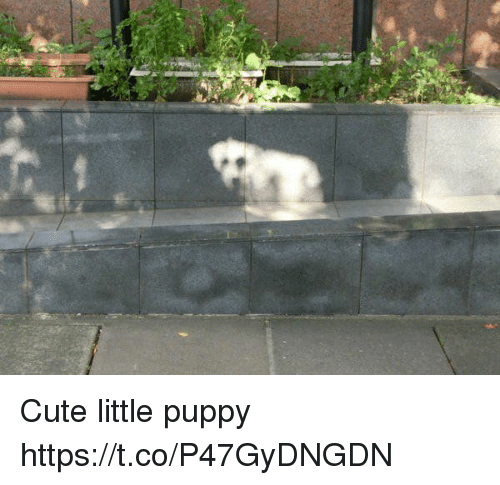 Cute, Puppy, and Faces-In-Things: Cute little puppy https://t.co/P47GyDNGDN