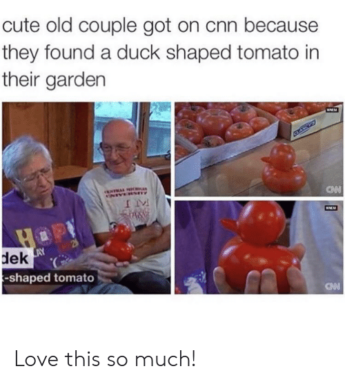 cnn.com, Cute, and Love: cute old couple got on cnn because  they found a duck shaped tomato in  their garden  dek  -shaped tomato Love this so much!