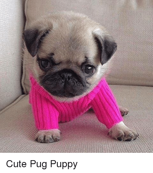 Unrecognizable Photos Celebs Without Makeup as well Cute Pug Puppy 2976760 furthermore Galileo Galilei Dropping A Feather And Hammer also Ugly Girl Meme likewise The 10 Best Memes Of Grumpy Dog. on old funny people facebook