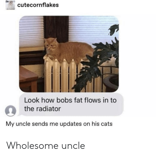 Cats, Fat, and Wholesome: cutecornflakes  Look how bobs fat flows in to  o the radiator  My uncle sends me updates on his cats Wholesome uncle