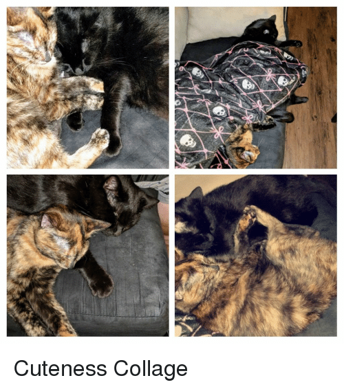 Collage and Cuteness: Cuteness Collage