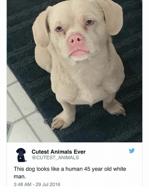 Memes, 🤖, and Cutest: Cutest Animals Ever CUTEST ANIMALS This dog looks  like