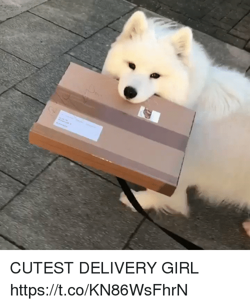 Girl, Girl Memes, and Delivery: CUTEST DELIVERY GIRL https://t.co/KN86WsFhrN