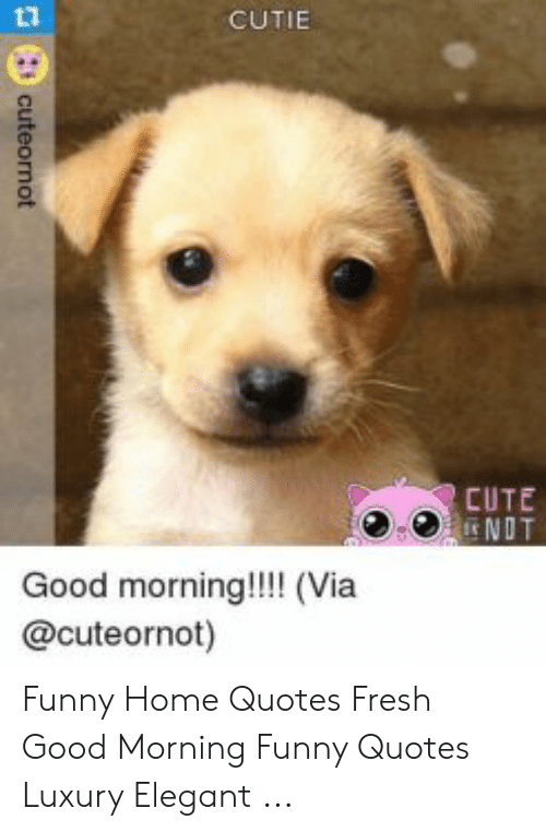 Cutie Cute Ndt Good Morning Via Cuteornot Funny Home