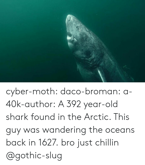 Tumblr, Shark, and Blog: cyber-moth:  daco-broman: a-40k-author:  A 392 year-old shark found in the Arctic. This guy was wandering the oceans back in 1627.  bro just chillin   @gothic-slug