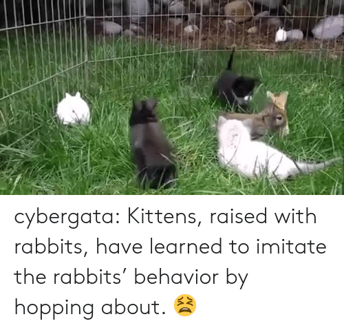 Tumblr, Blog, and Http: cybergata:   Kittens, raised with rabbits, have learned to imitate the rabbits' behavior by hopping about.     😫