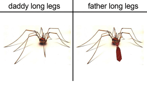 Irl, Daddy Long Legs, and Daddy: daddy long legs  father long legs