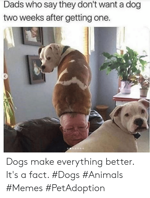 Animals, Dogs, and Memes: Dads who say they don't want a dog  two weeks after getting one. Dogs make everything better. It's a fact. #Dogs #Animals #Memes #PetAdoption
