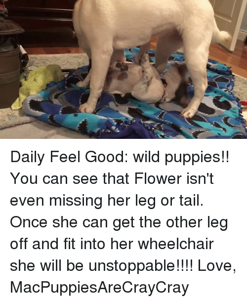 Memes, Puppies, and Flower: Daily Feel Good: wild puppies!!   You can see that Flower isn't even missing her leg or tail. Once she can get the other leg off and fit into her wheelchair she will be unstoppable!!!!   Love, MacPuppiesAreCrayCray
