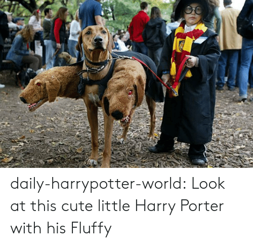 Cute, Tumblr, and Blog: daily-harrypotter-world:  Look at this cute little Harry Porter with his Fluffy