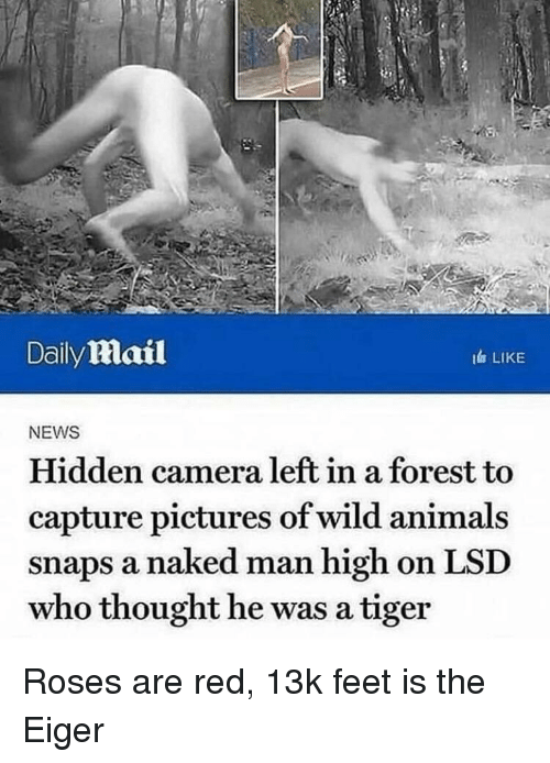 Daily lMlail I LIKE NEWS Hidden Camera Left in a Forest to